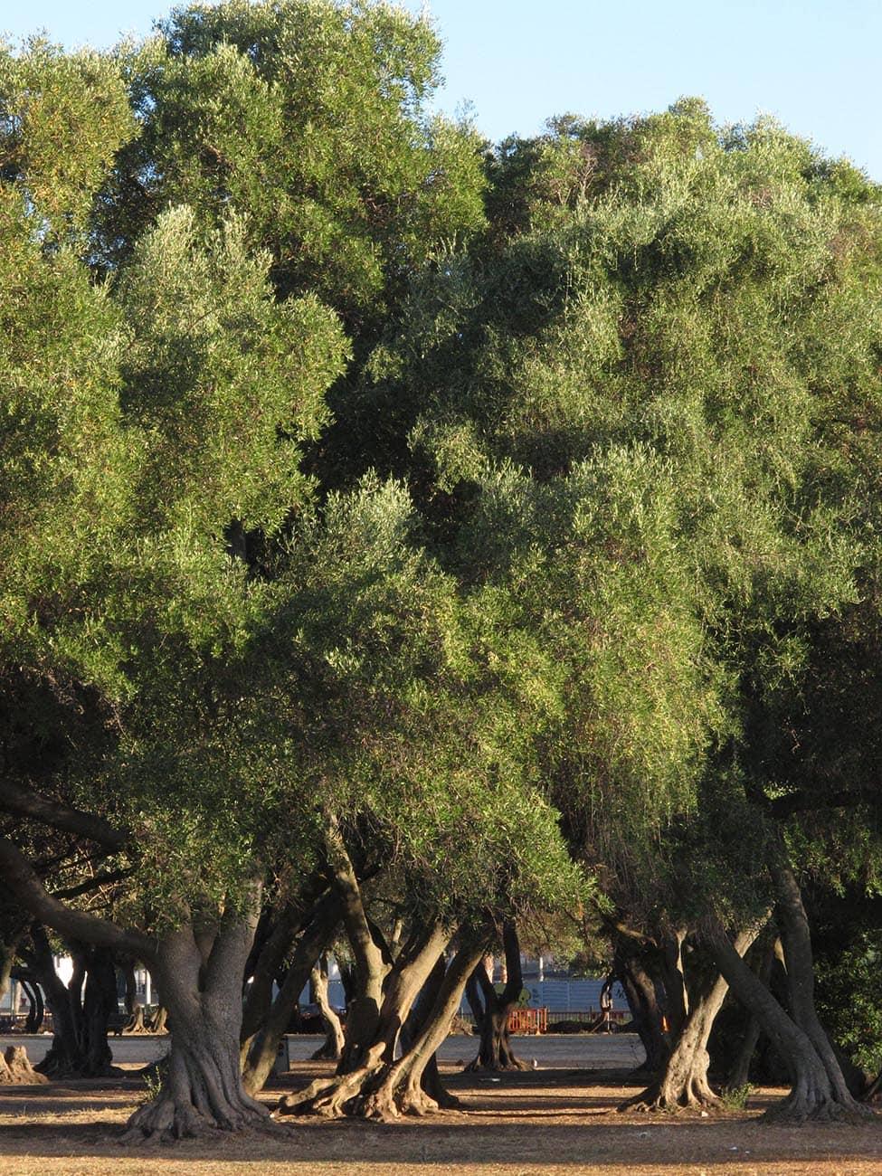 jardim-belem-lisboa-05