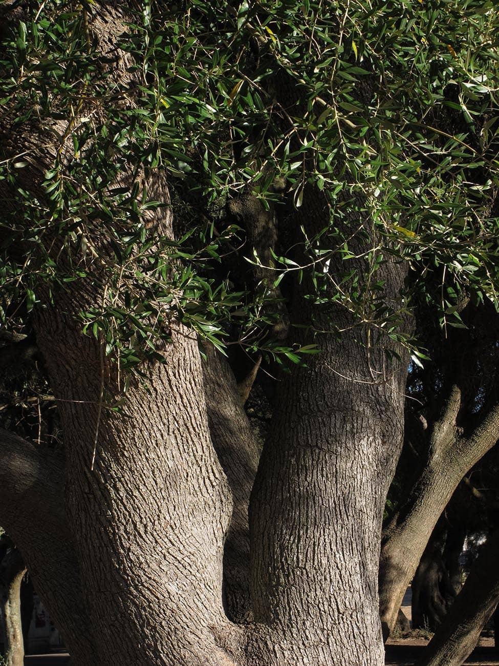 jardim-belem-lisboa-32