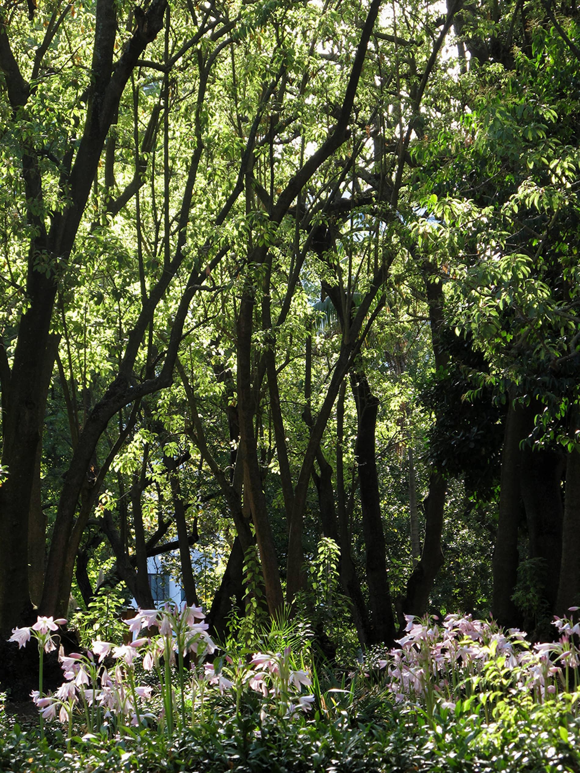 jardim-campo_grande-lisboa-10