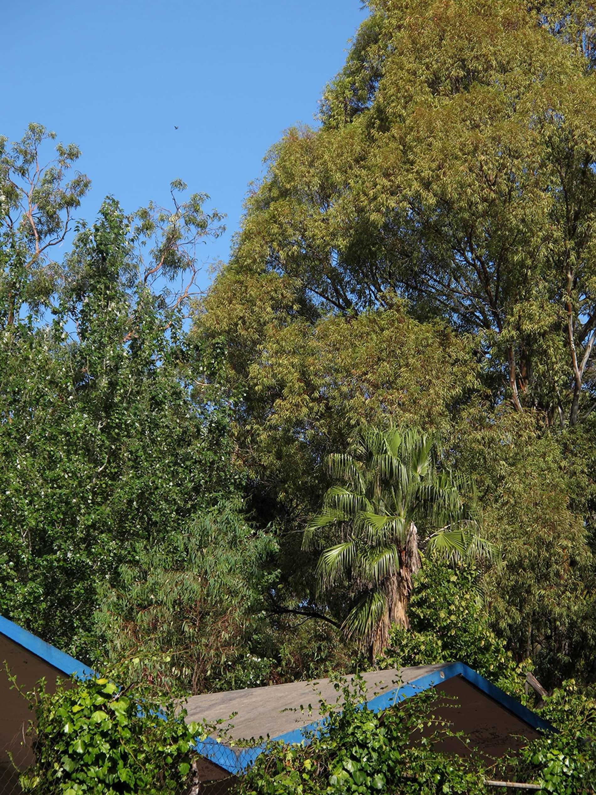 jardim-campo_grande-lisboa-17