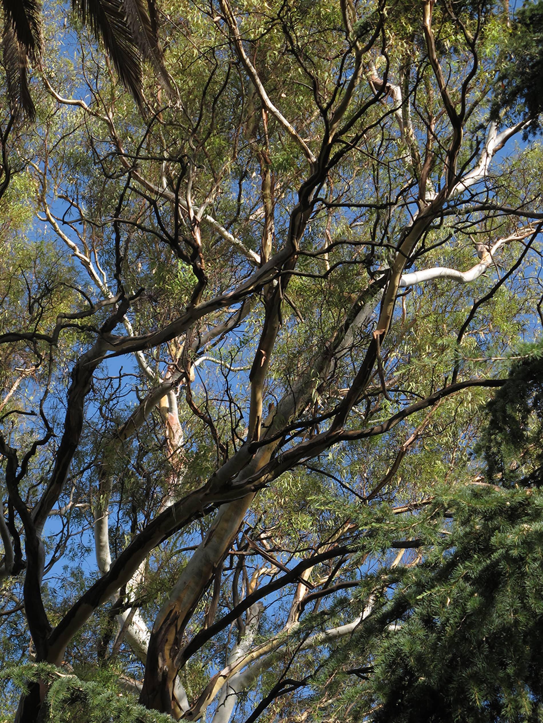 jardim-campo_grande-lisboa-4