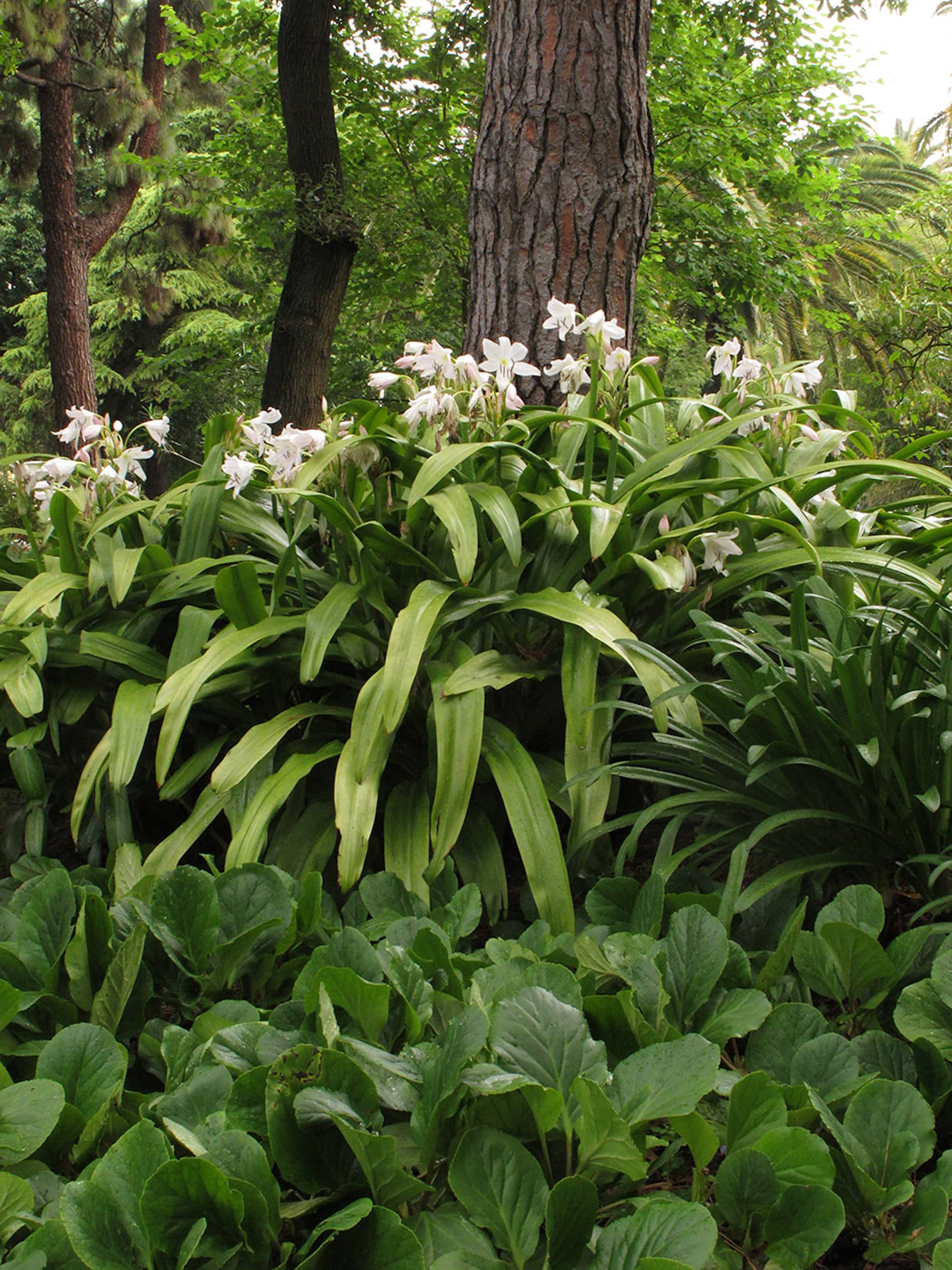 jardim-estrela-lisboa-11