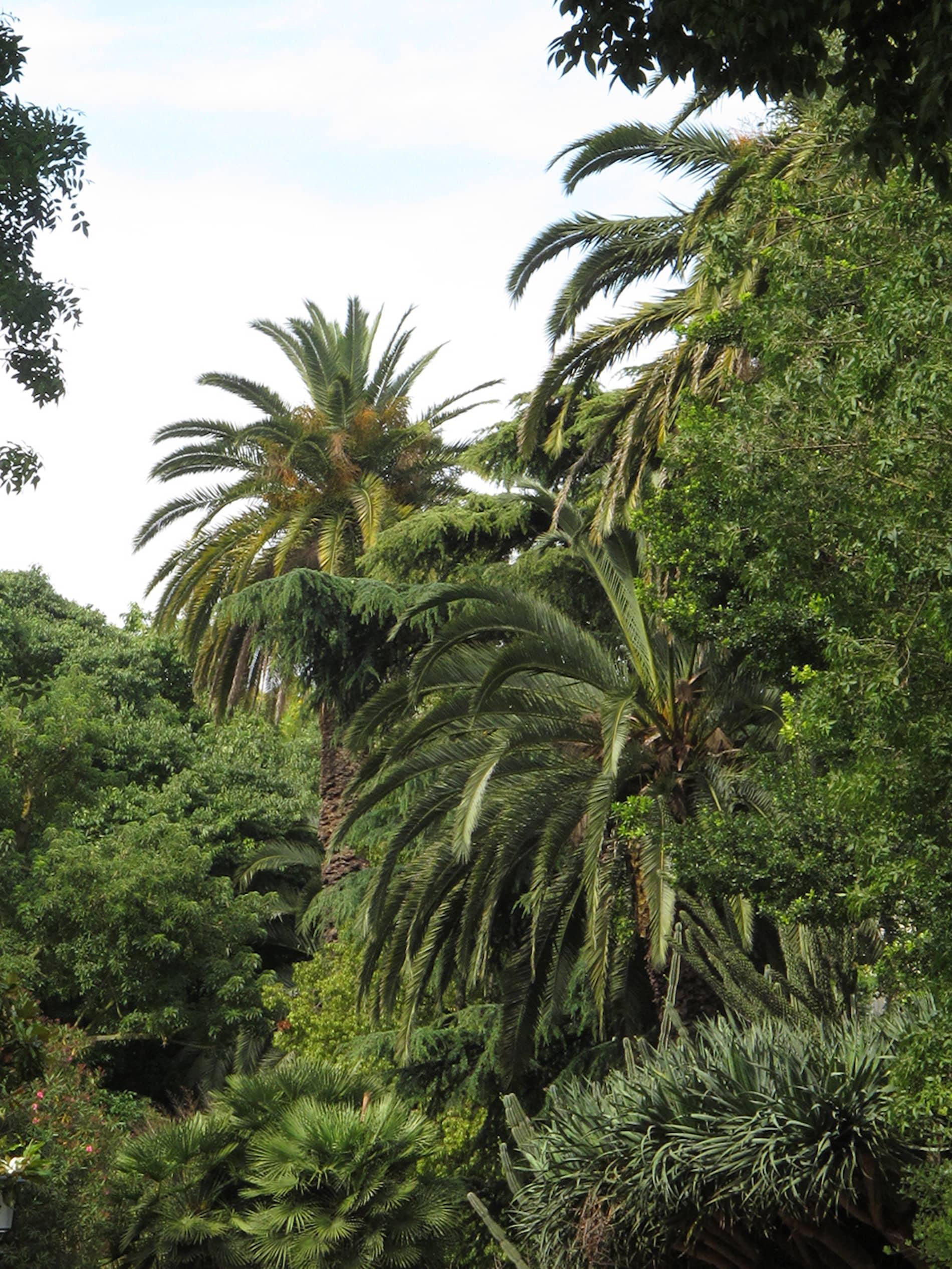 jardim-estrela-lisboa-4