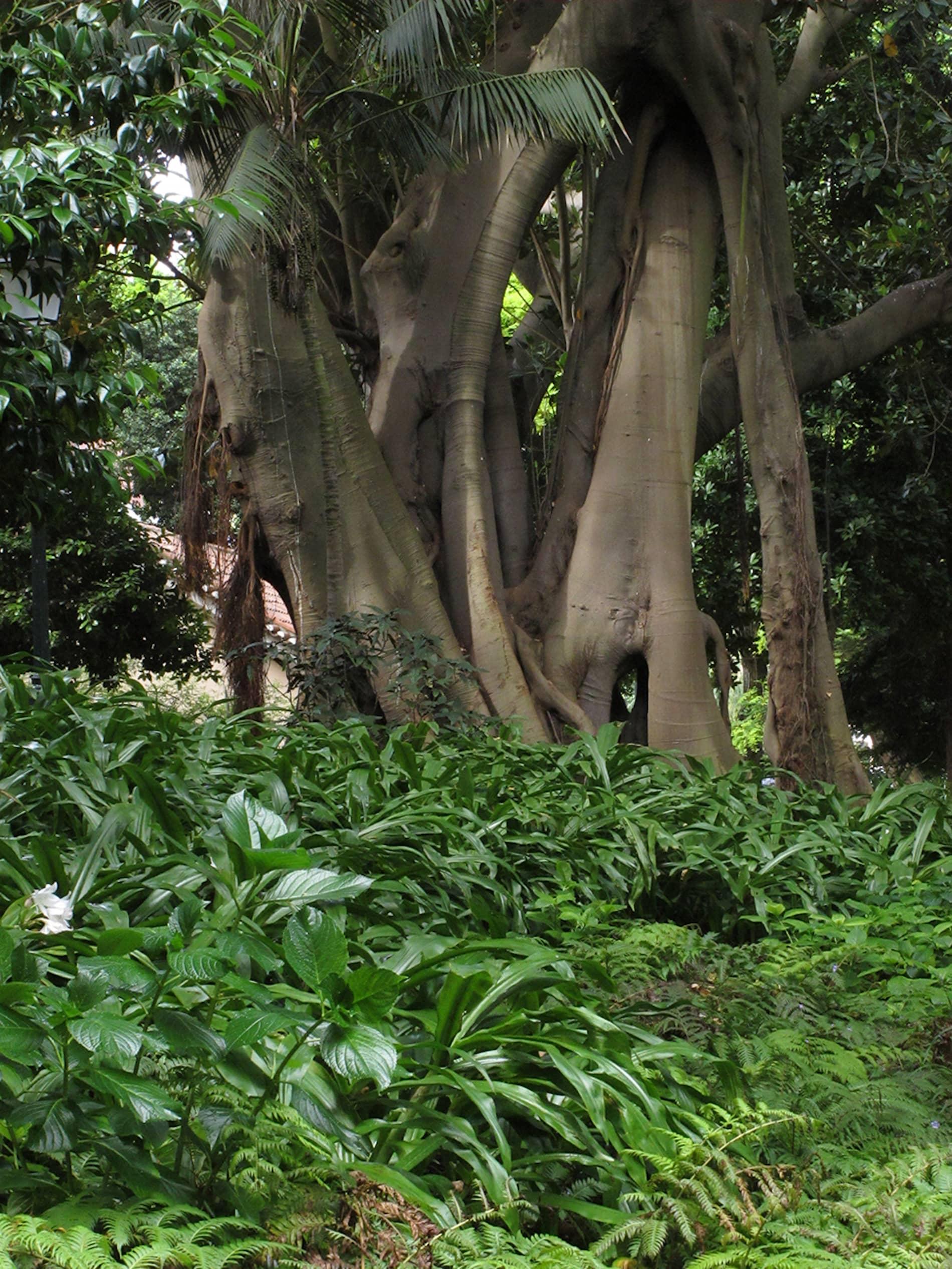 jardim-estrela-lisboa-6