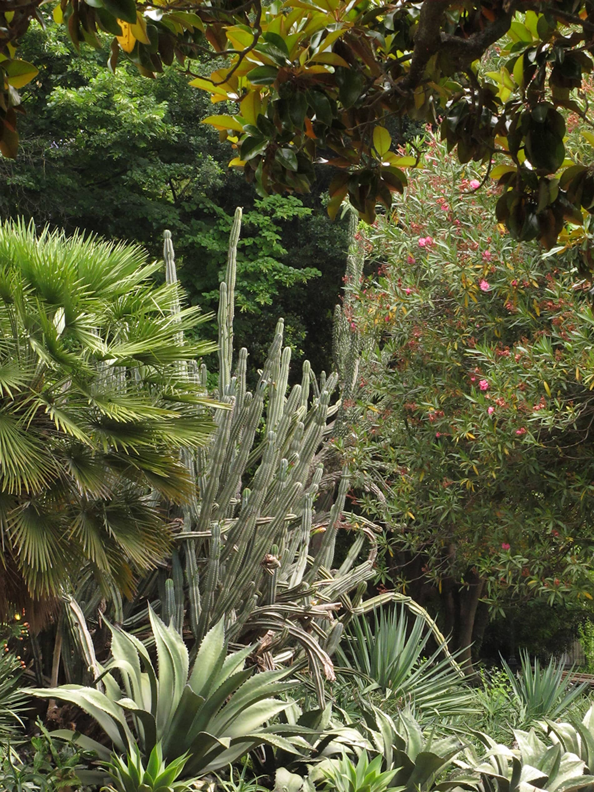 jardim-estrela-lisboa-9