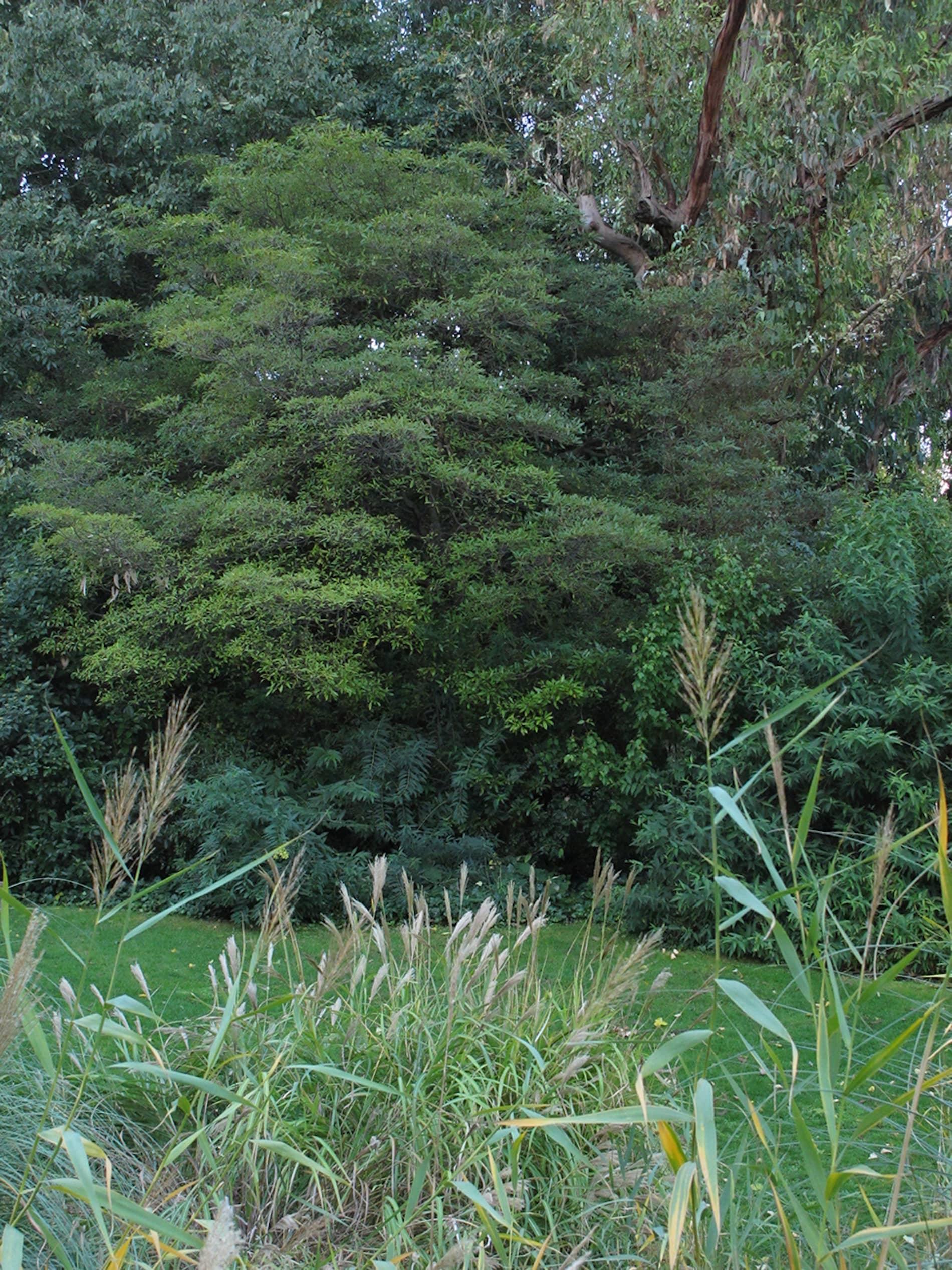 jardim-gulbenkian-lisboa-7