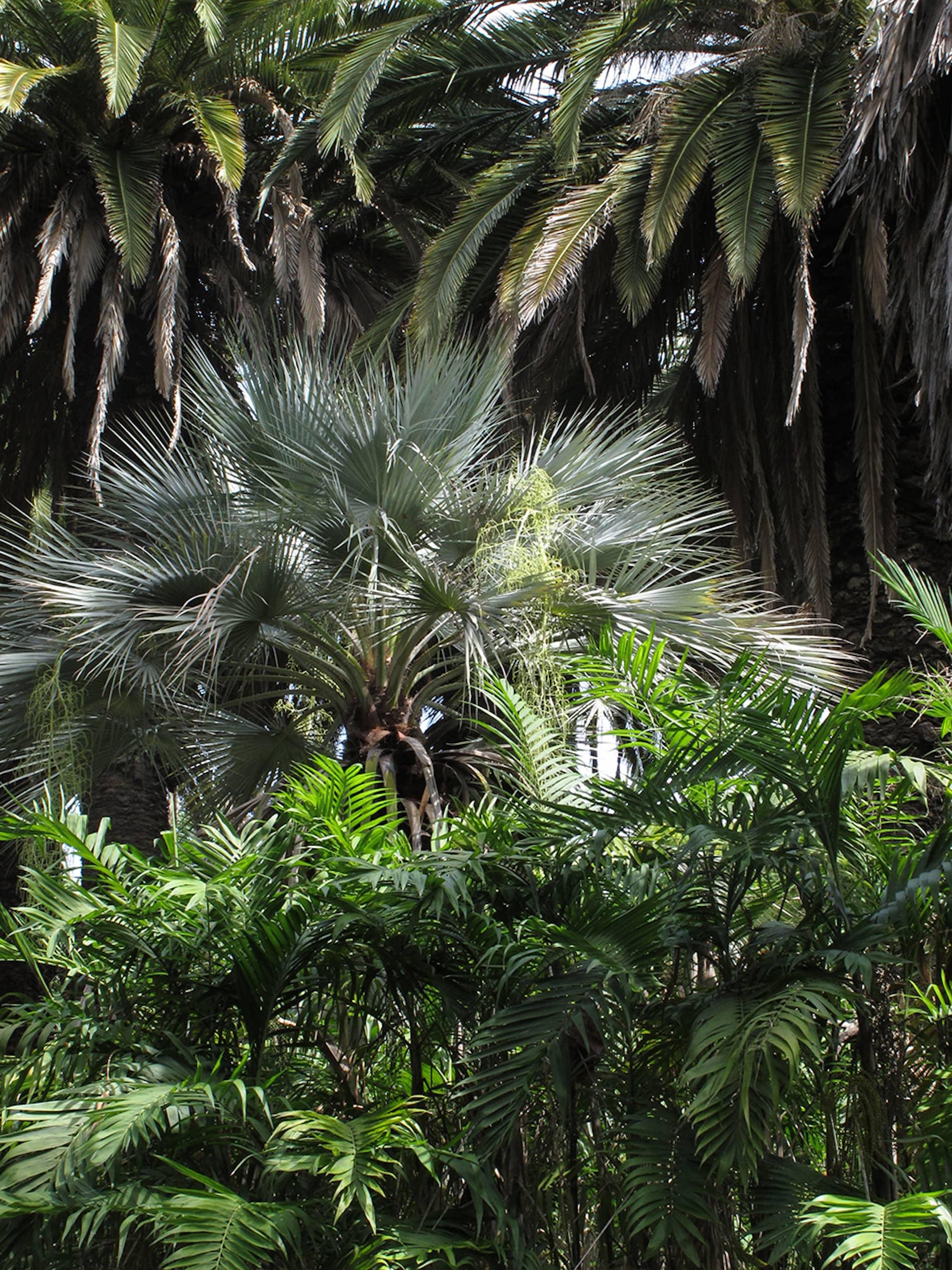 jardim-ultramar-lisboa-11