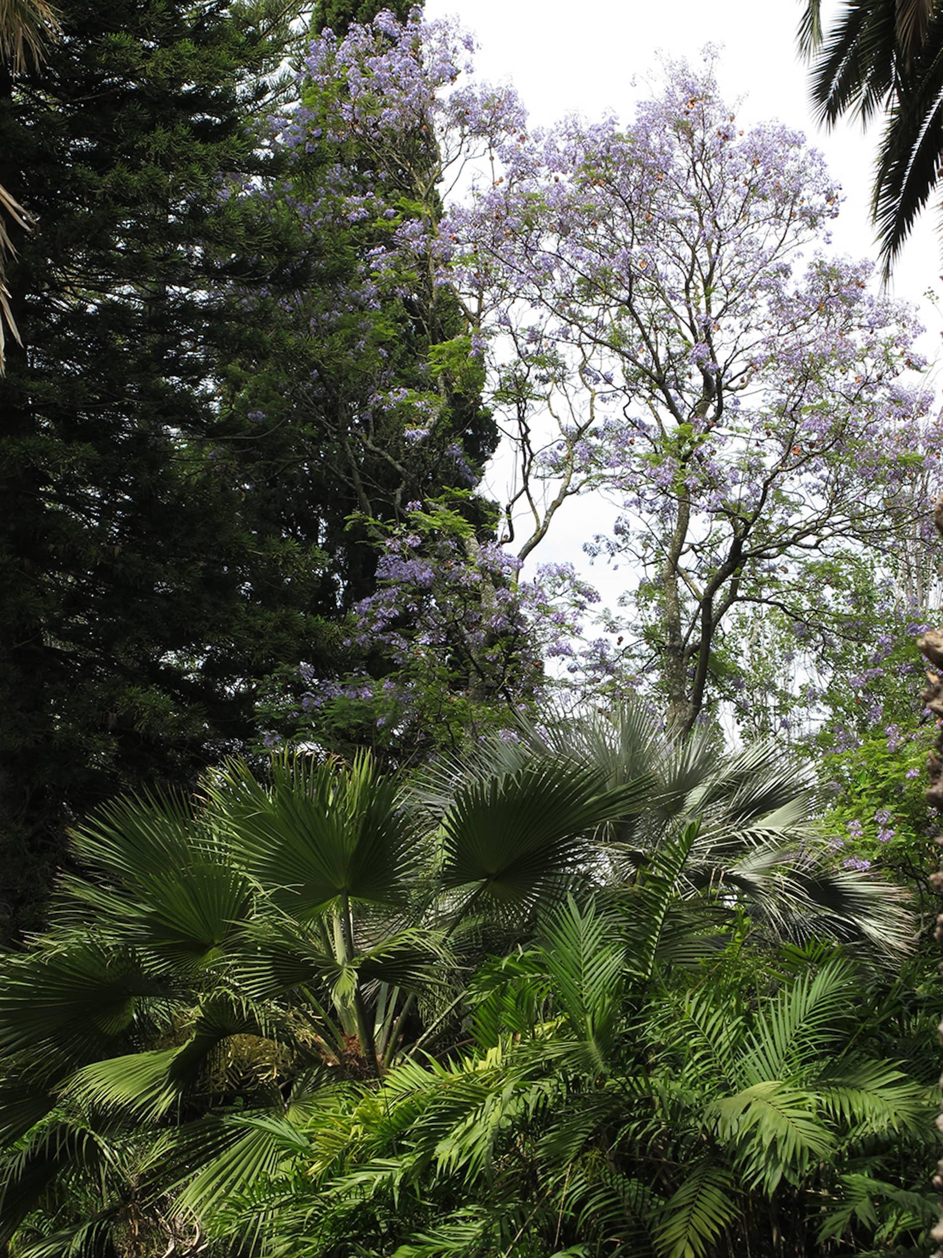 jardim-ultramar-lisboa-2