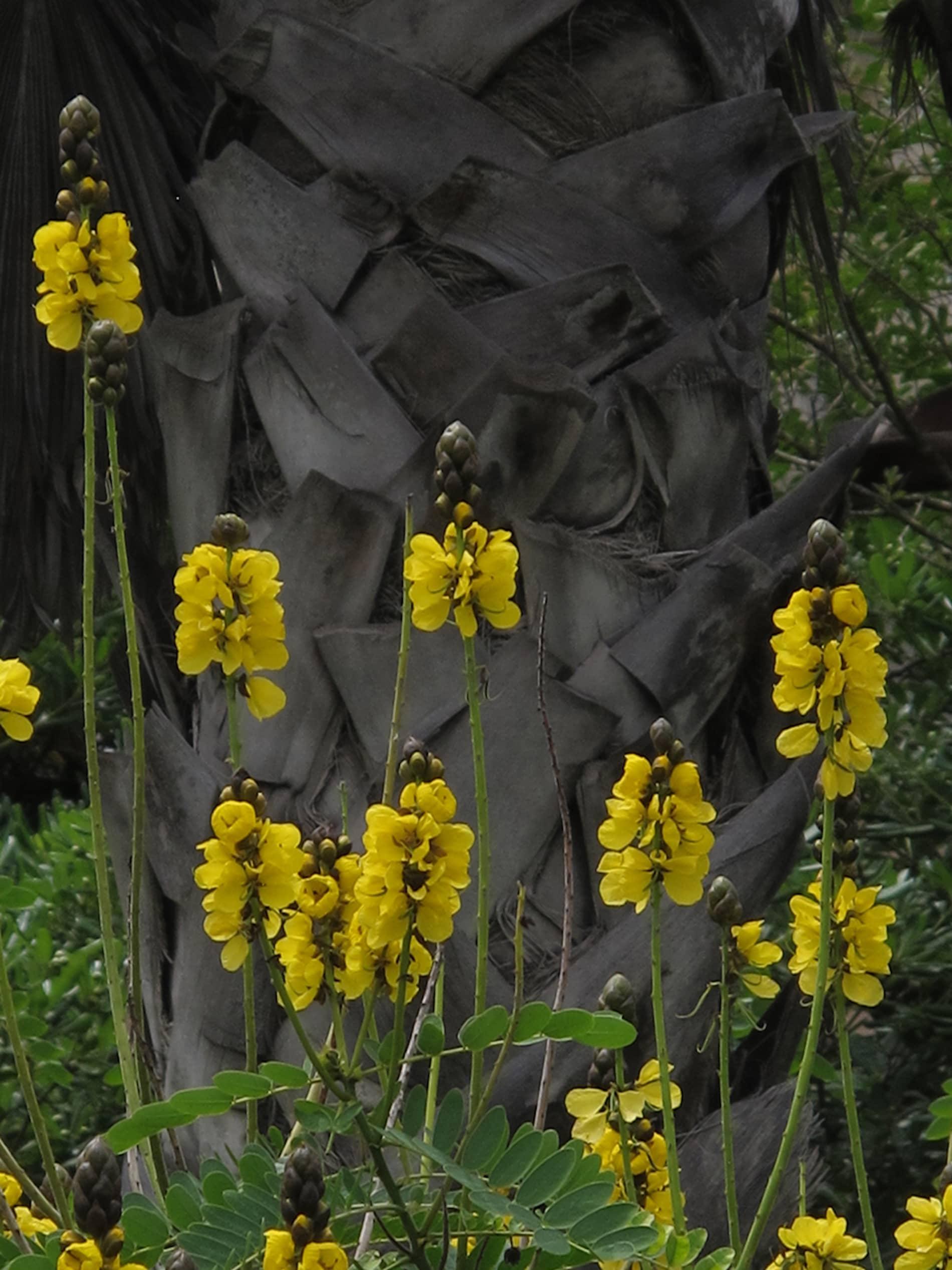 jardim-ultramar-lisboa-6