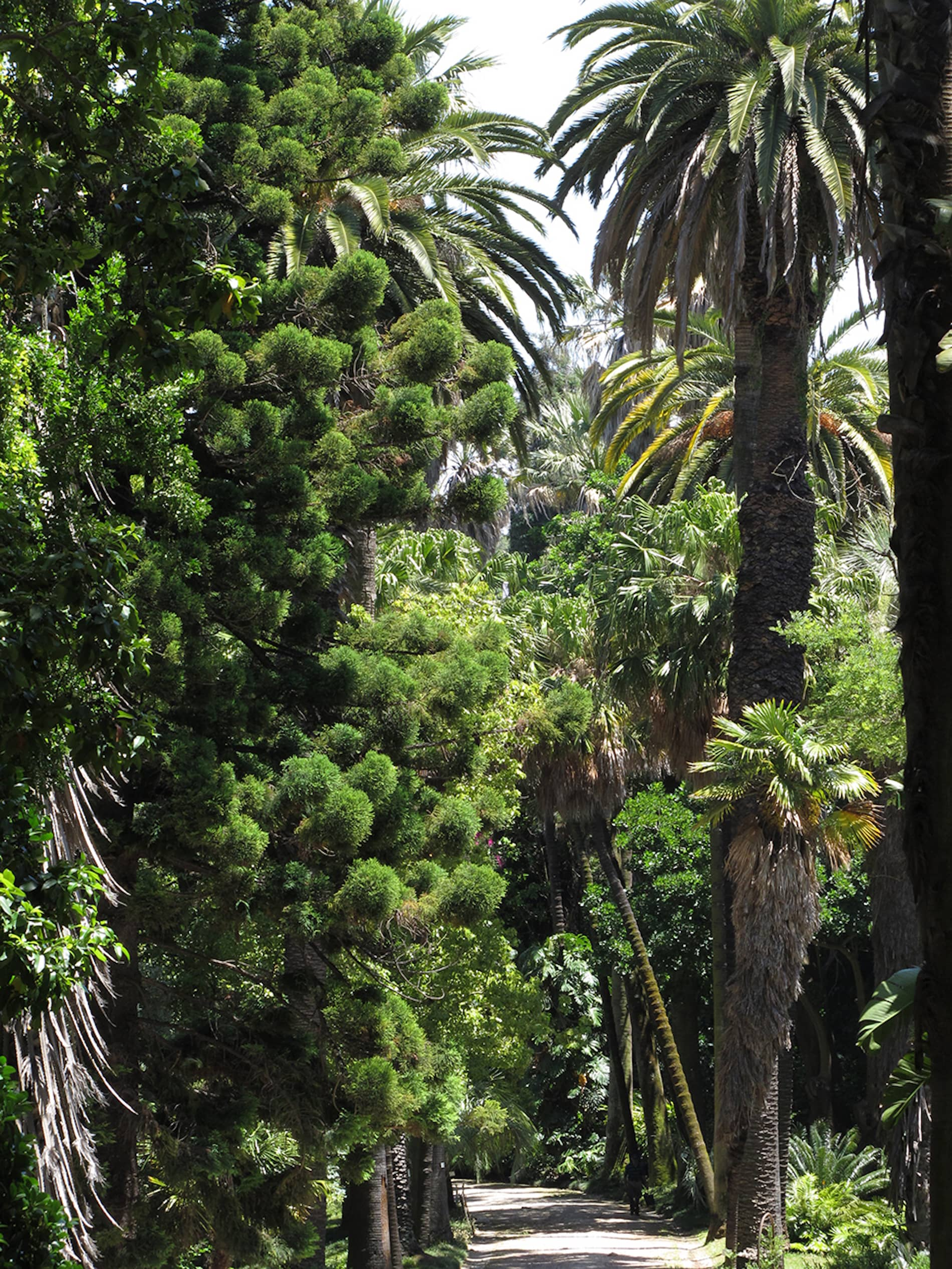 jardim-universidade-lisboa-11