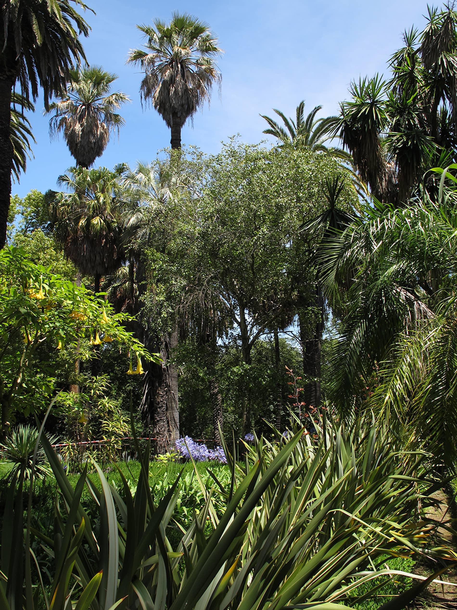 jardim-universidade-lisboa-14
