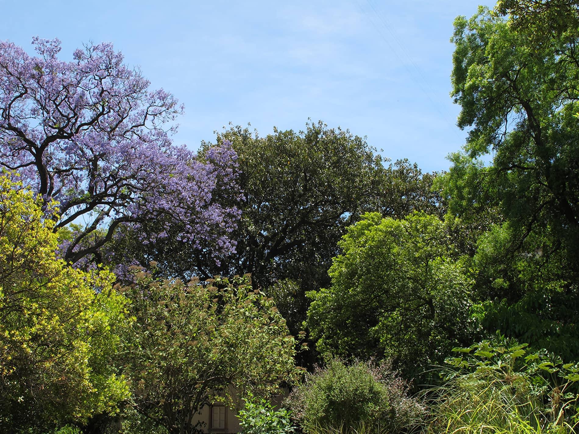 jardim-universidade-lisboa-2